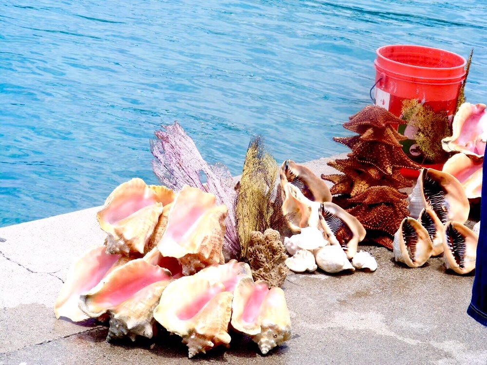 Nassau Bahamas Conch Style by Belle Solo Travel
